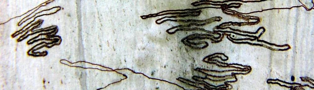 Eco Scribbles